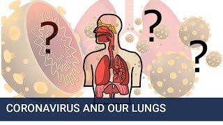 How does Coronavirus affect our lungs?