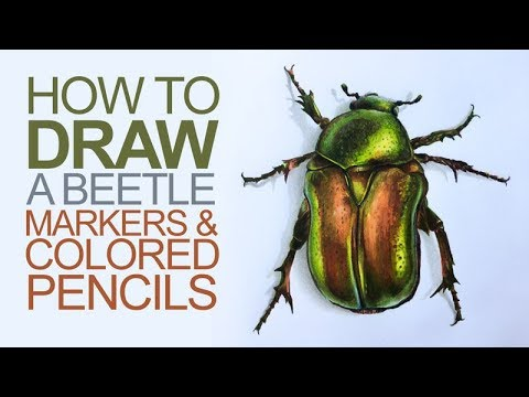 Drawing With Markers And Colored Pencils Beetle Ilration