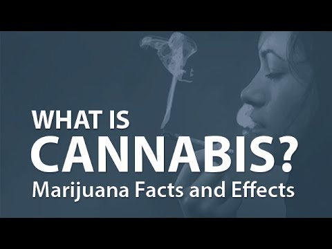 What is Cannabis? Marijuana Facts and Effects