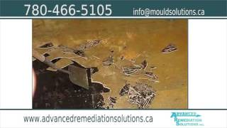 Advanced Remediation Solutions Inc