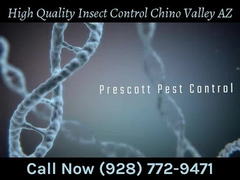 High Quality Insect Control Chino Valley AZ