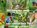 Suara Burung Ribut Untuk Menangkap Cucak Ijo Paling Ampuh Full  Mp3 - Mp4 Download
