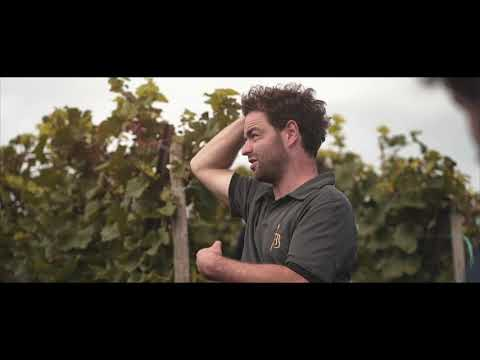 Vitis Vin I Wineries I Domaine Barmès-Buecher I 2021