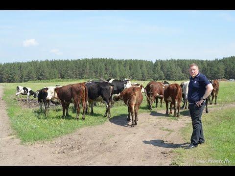 Непростая жизнь простого российского фермера. Глава КФХ, Дмитрий Барбашин.