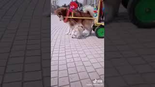 Pets love || funny animals || Thả tao ra Sen!! Để tao mần thịt nó !!