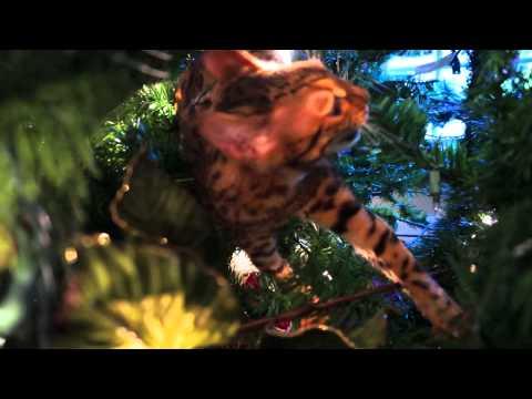 Beavis The Kitten Is Fighting The War On Christmas