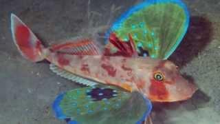 Los 10 peces mas extraños del mundo / 10 weirdest fish in the world