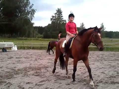 häst hoppning