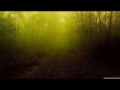 Tuyển tập ca khúc hay nhất về Mùa thu