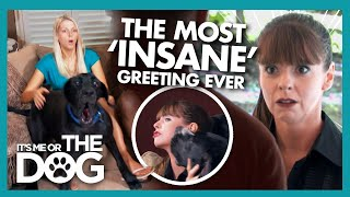 Victoria in Shock after the 'Most Insane' Greeting She's Ever Endured! | It's Me or The Dog