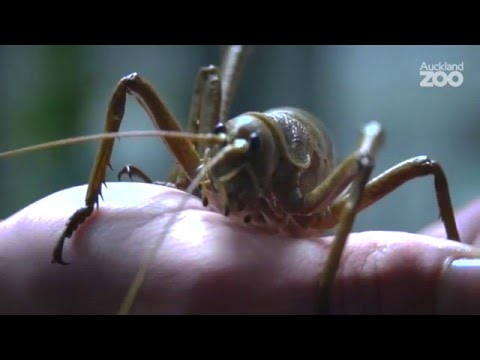 Thumbnail: Zoo Tales - Excellent ectotherms at Auckland Zoo