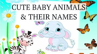 Cute baby animals and their names /Babies of animals