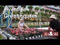 Riverside Greenhouses