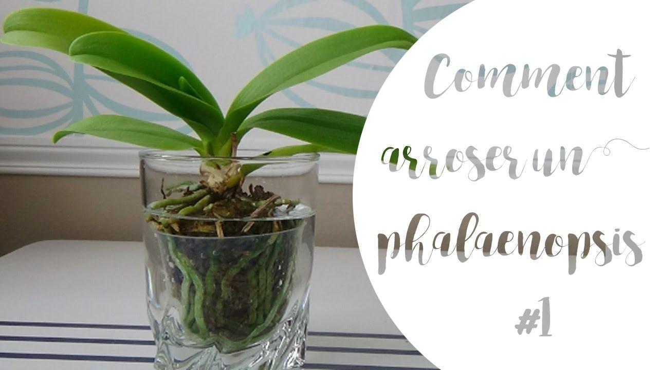 comment arroser un phalaenopsis partie 1 youtube. Black Bedroom Furniture Sets. Home Design Ideas