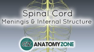 Spinal Cord - Meninges and Internal Structure - Anatomy Tutorial