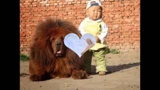 лучшие собаки из Эмбы
