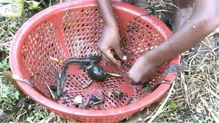 বাচ্চাদের মাছ ধরার ফাঁদ..দেখুন পিচ্চিগুলো কিভাবে মাছ ধরলো !!