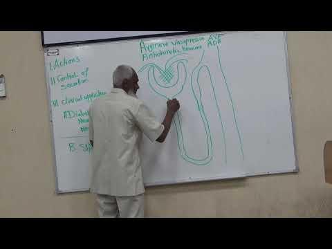 Year 3 - Module B - Vasopressin (ADH) Tutorial