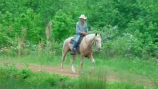 Wyatt Dappled Palomino Bombproof Gaited Trail Horse For Sale.wmv