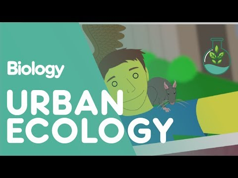 What is urban ecology? | Biology for All | FuseSchool