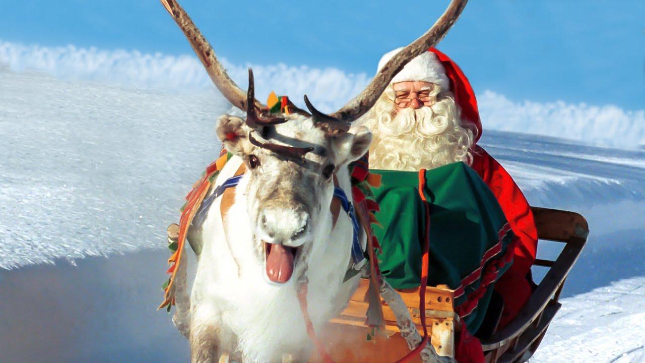 Nomi Renne Babbo Natale.Renne Di Babbo Natale In Lapponia Finlandia Rovaniemi Video Per