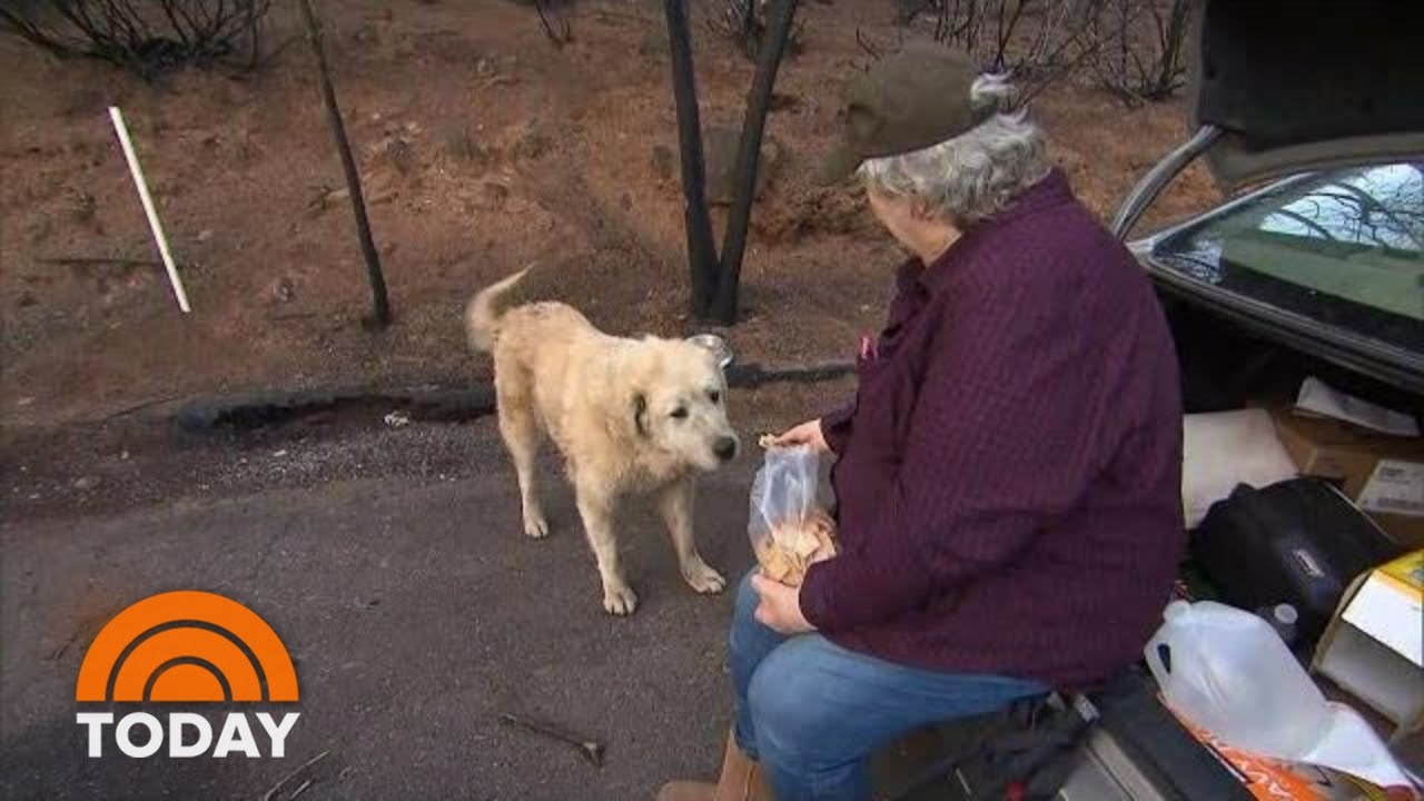 Weeks After Deadly Wildfire In Paradise, Woman Reunites With 2 Dogs   TODAY