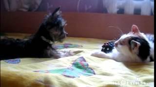 Give back my toy! (Поверни мені мою іграшку!)