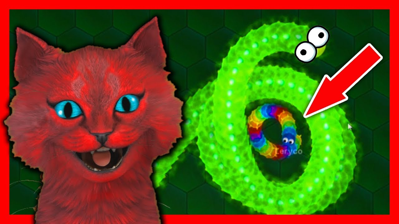 Как играть с злым котом