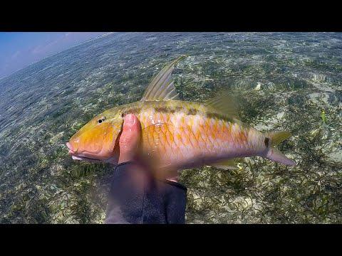Caught This Beautiful Tropical Fish In The Maldives [Maafushi]