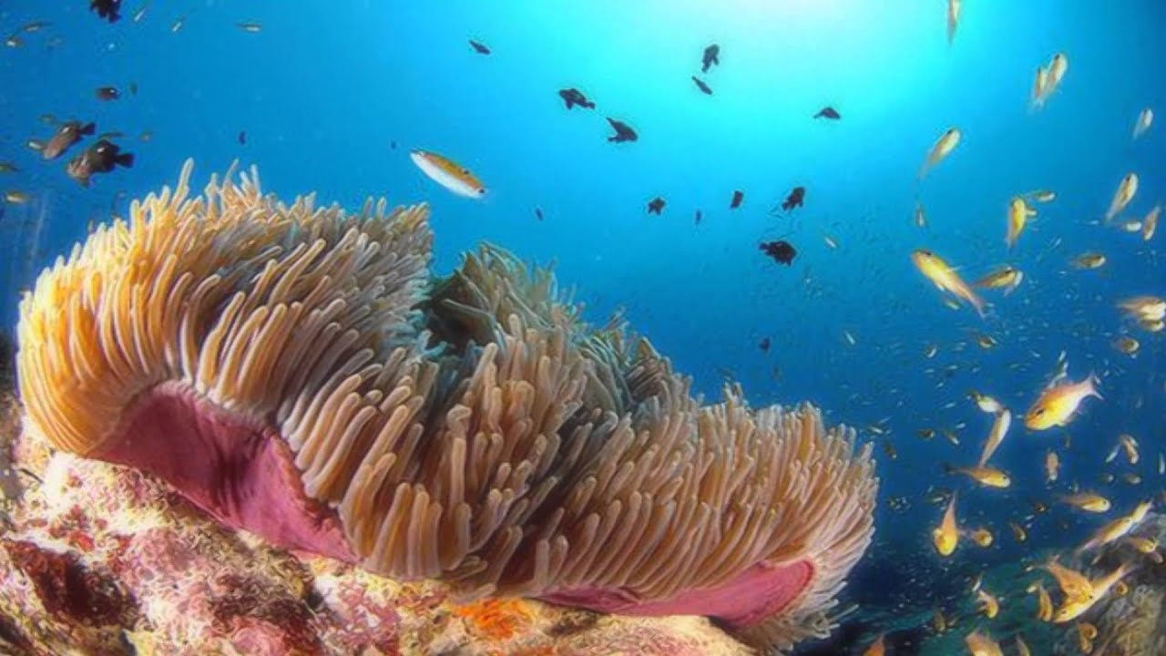 beautiful colorful coral reefs - photo #20