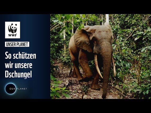 So schützen wir unsere Dschungel   WWF Unser Planet