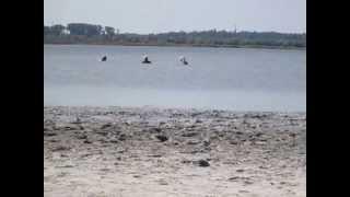 9 Ozero Gopri(Мое путешествие в Голую Пристань на озеро Гопри - лето 2013 Смотреть с 1- Kherson-korabel - http://youtu.be/IcFnKdpp4Ug . Омолаживаю..., 2013-07-10T15:40:22.000Z)