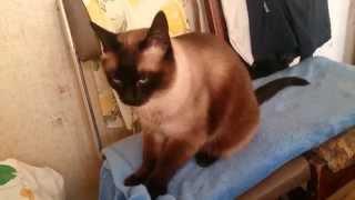 Кот топчет одеяло