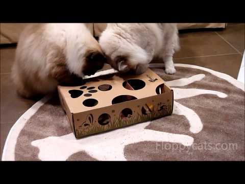 Puzzle Toy for Cats - CatAmazing - Ragdoll Cats Receive for Testing - ラグドール - Floppycats
