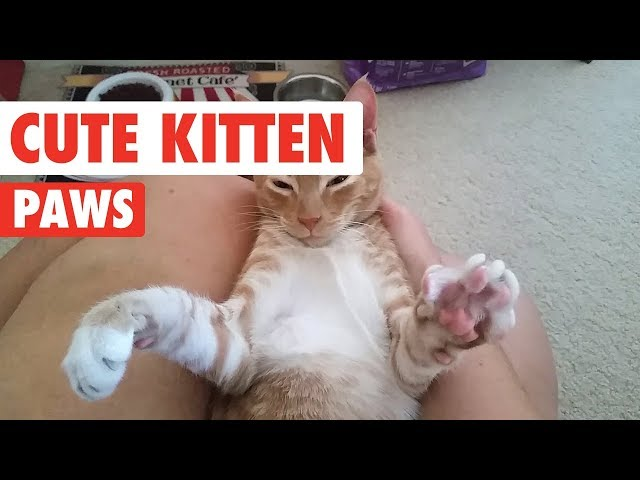 Kitten Paws So Cute You'll Die | Cute Kitten Videos 2017