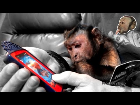 Monkey and Spider-Man Phone