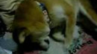 愛犬の映像です^^