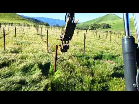 Removing vineyard end posts to be reused