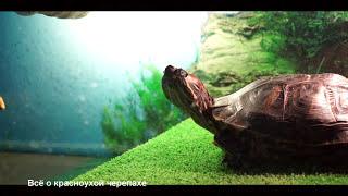 Делаем островок для красноухой черепахи/Make an island for the turtle