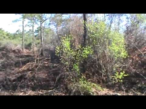 Wildland fire carolina forest horry county sc. enhanced water stream foam used.