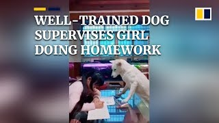Well-trained dog supervises girl doing homework in China