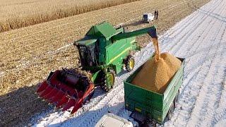 Żniwa kukurydziane w śniegu.