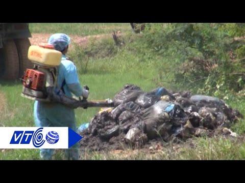Formosa và những cảnh tỉnh về ô nhiễm môi trường | VTC