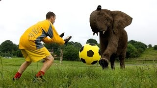 Elephant Playing Football!