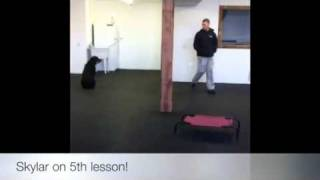 Rottweiler's 5th Lesson! Dog Trainer Northern Virginia!