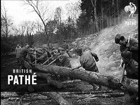 Canadian Forestry Corps In Britain (1941)