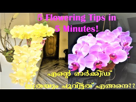 Orchid Flowering Tips
