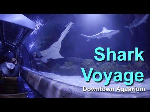 2017 Houston Downtown Aquarium Shark Voyage Train Ride On Ride Low Light HD POV