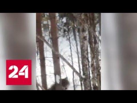 Вопрос: В какой части России живет больше всего волков и медведей?