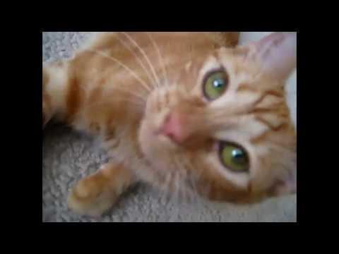 Cat Purr --- CAT COMPILATION